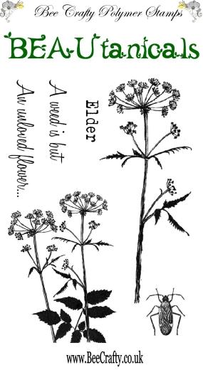 beautanicals-set-elder